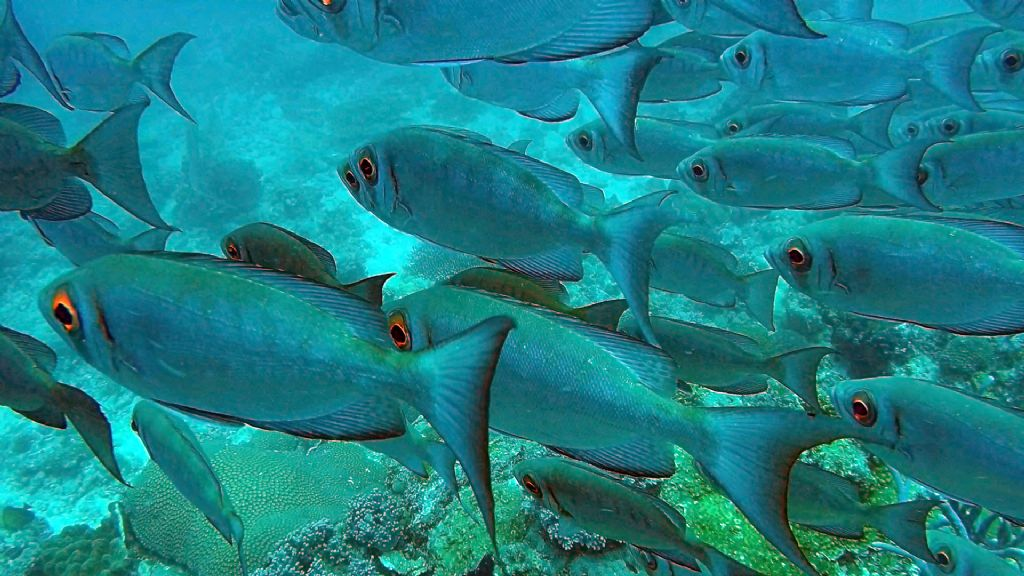 Pesci del Madagascar