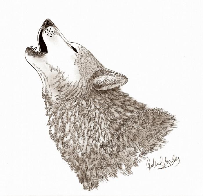 L 39 ululato del lupo forum natura mediterraneo forum for Lupo disegno a matita