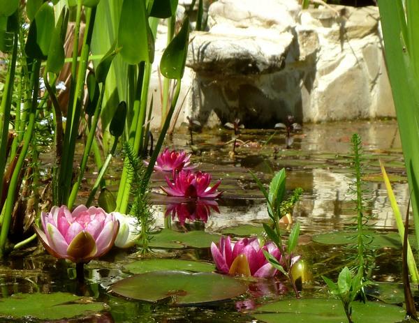 Il laghetto stupendo anche nella forma di sicuro for Alghe filamentose laghetto