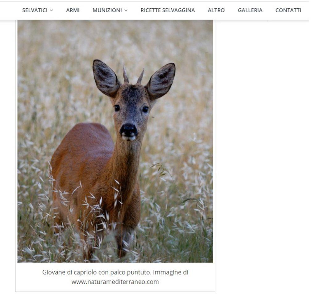 Foto di NM su sito di caccia...