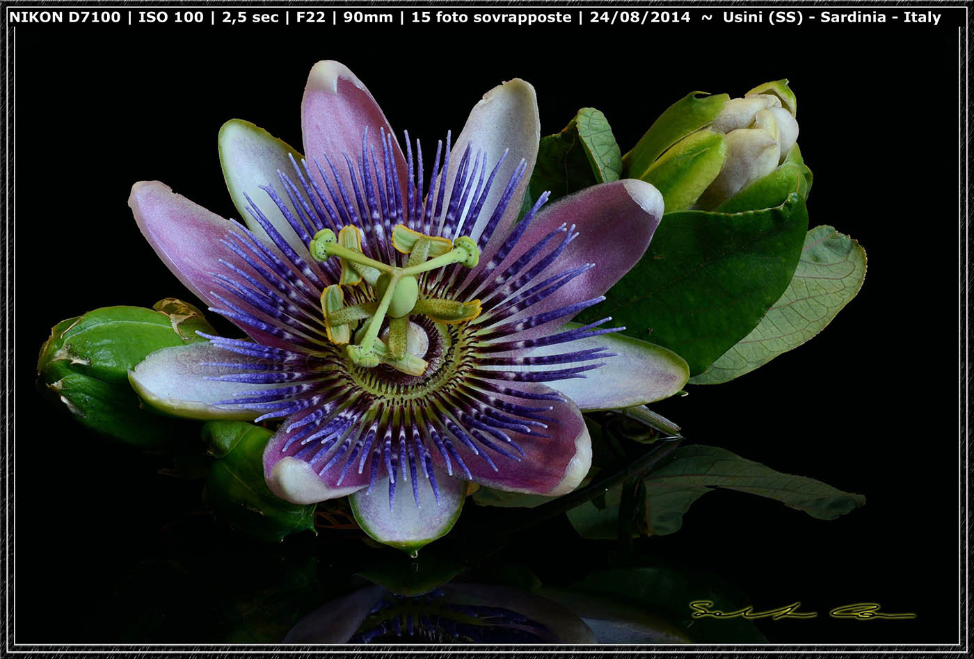 Grazie Focus stacking