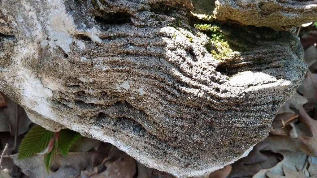 Stromatolite?