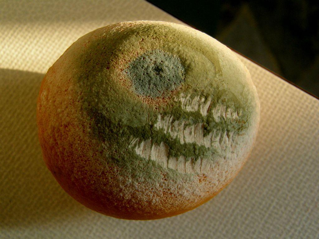 Le muffe sulla frutta sono funghi?