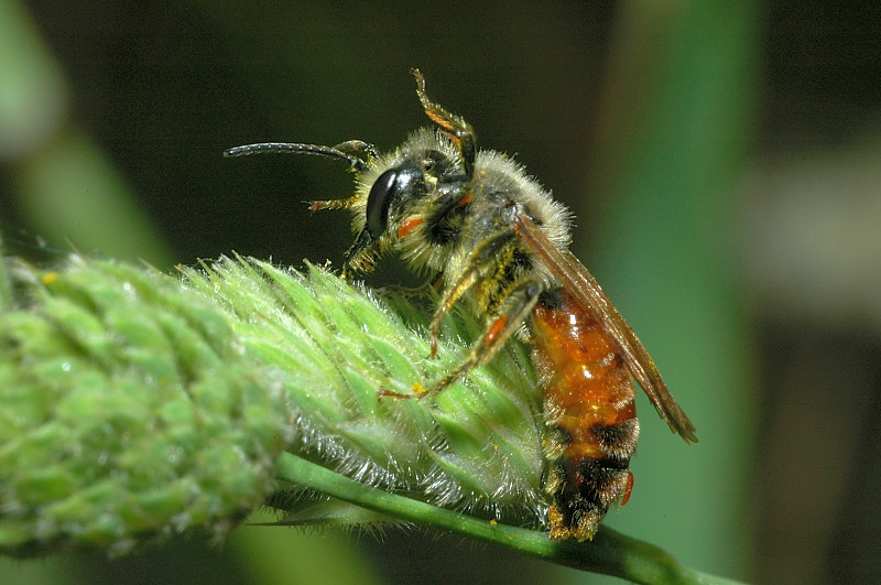 Una pausa pranzo  entomofila...