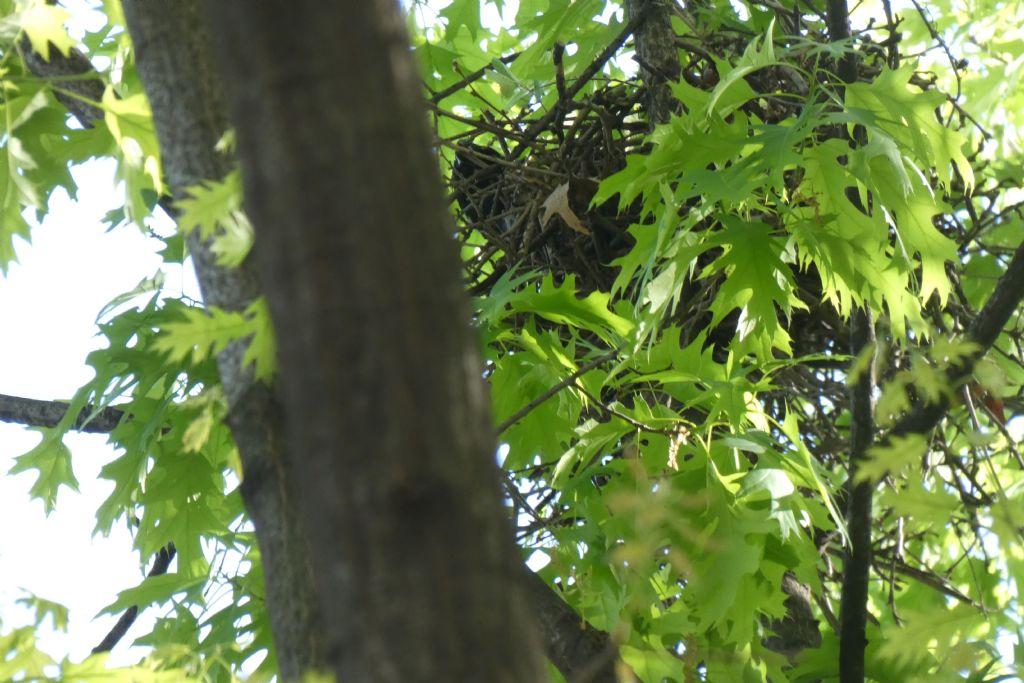 il Birdwatching al tempo del Covid 19