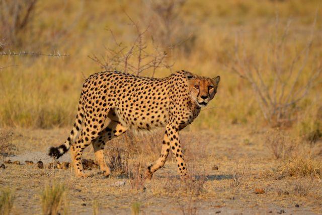 Scatti Namibia