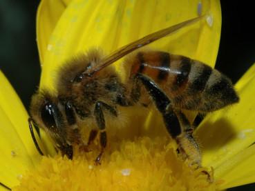 La scomparsa delle api 1