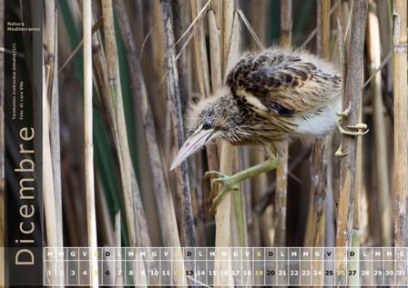 Calendario Natura Mediterraneo 2016